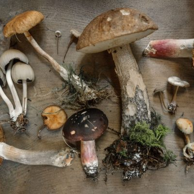 """Magic Mushrooms"": Erleben Pilze als Skin-Superfoods ein Beauty-Revival?"